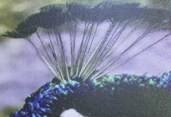 Изображение, отпечатанное на бумаге с точечным глянцем, бликует гораздо меньше. Обратите внимание на зернистую структуру поверхности бумаги